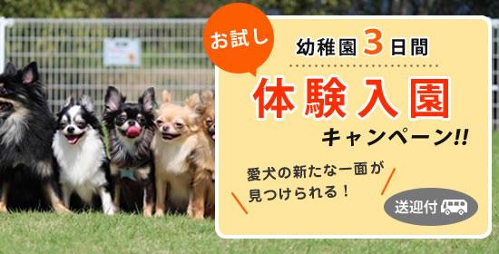 犬の幼稚園体験入園キャンペーン